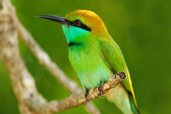 Pájaro con largo pico negro