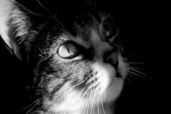 Los pelos del gato