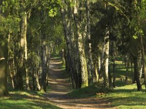 Árboles en el camino