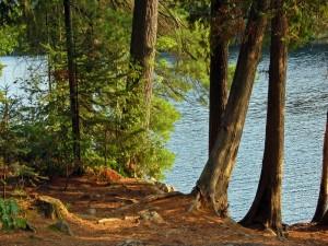 Árboles cercanos al agua