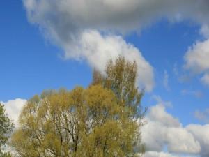Nubes sobre los árboles verdes