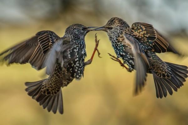 Pajaritos unidos en el aire