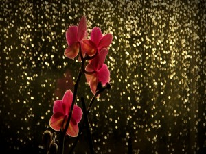 Postal: Orquídeas y luces