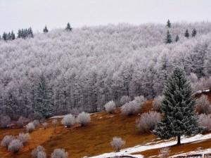 Bosque en invierno (Rumania)