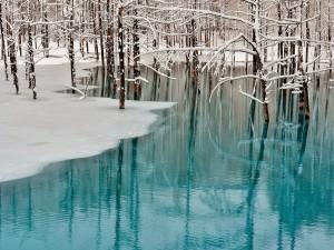 Fascinante paisaje invernal