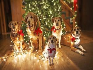 Postal: Perros con luces junto al arbol de Navidad