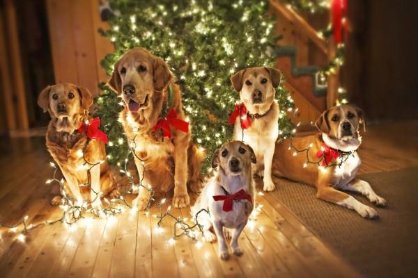 Perros con luces junto al arbol de Navidad