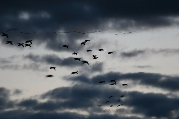 Aves en el cielo gris