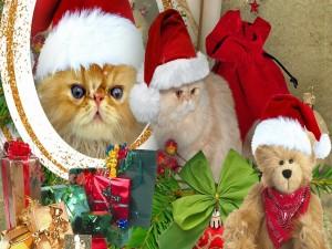 Postal: Gatitos con gorros de Papá Noel