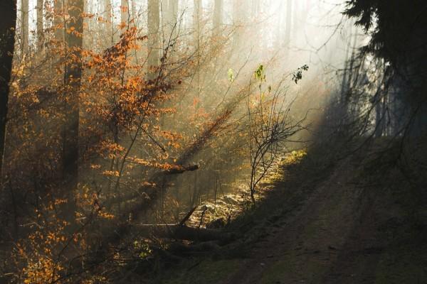 La luz del sol ilumina el bosque