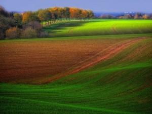 Postal: Campos sembrados