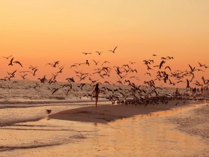 Postal: Gaviotas volando sobre la playa