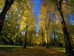 Postal: Arboleda en el parque