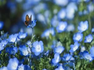 Mariposa en un campo de flores azules