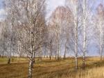 Árboles sin hojas en invierno