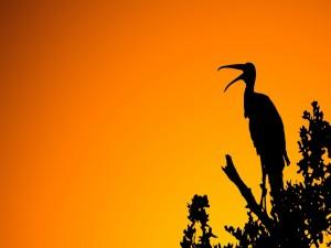 Postal: Gran pájaro con el pico abierto
