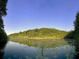 Postal: Hojas verdes en la superficie del agua