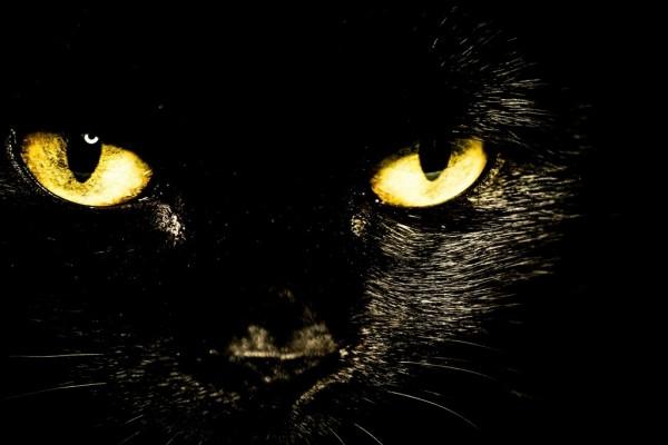 Impresionante cara de un gato negro