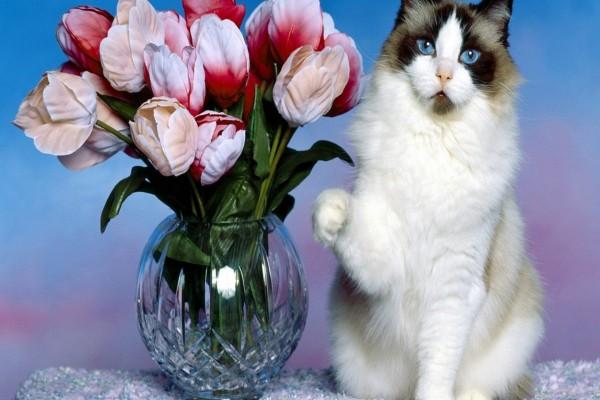 Un gato y un jarrón con flores