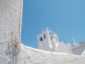 Araña de grandes patas en una pared blanca