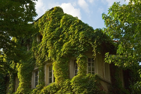 Casa cubierta por plantas verdes