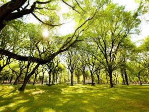 Arboleda verde en un gran parque