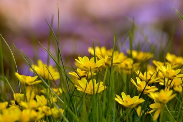 Florecillas amarillas y hierba verde