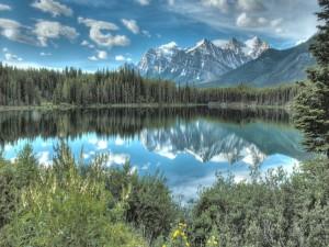 Lago rodeado de pinos próximo a las montañas