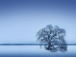 Postal: Un árbol en la explanada nevada
