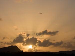 Postal: Atardecer en el puerto de St. John, Antigua