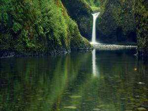 Cascada en un entorno verde