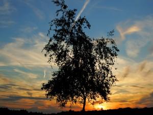 Postal: Árbol de ramas finas y hojas pequeñas