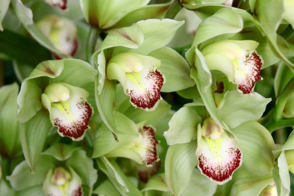 Conjunto de orquídeas