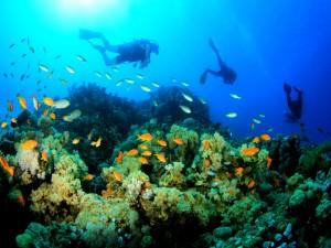 Buceo deportivo entre peces de colores