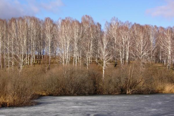 Grupo de árboles cerca del agua en invierno