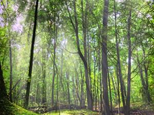 Bosque verde iluminado por el sol