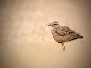 Pájaro con bonitas plumas