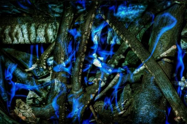 Ramas y troncos