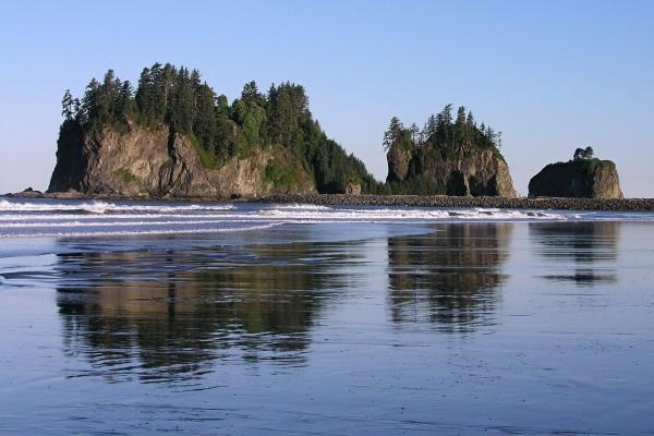 Isla con árboles cerca de la playa