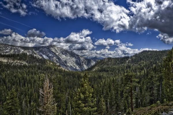 Grandes pinos en la montaña