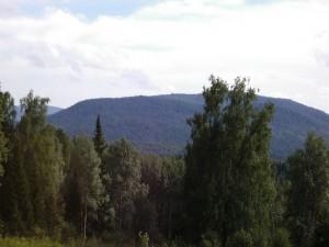 Postal: Árboles verdes en la naturaleza