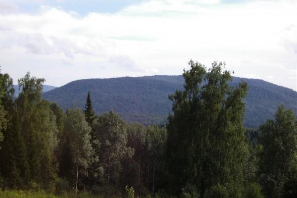 Árboles verdes en la naturaleza