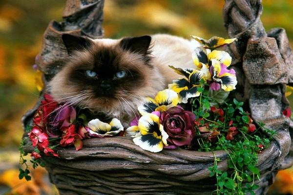 Gata sentada en las flores