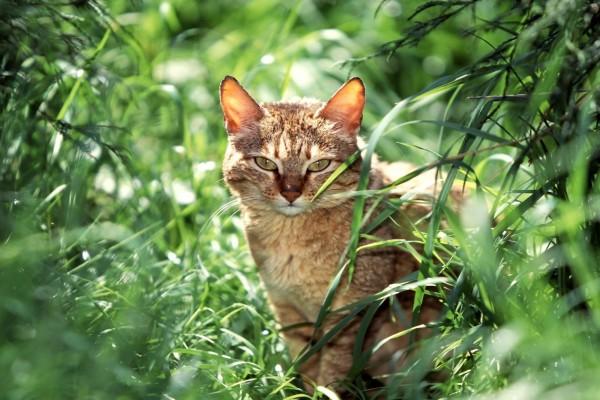 Gato entre plantas verdes