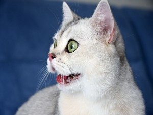 Gato con cara divertida