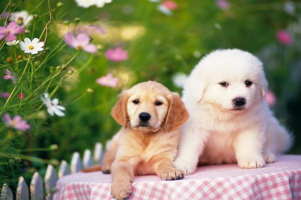 Perros sobre la mesa y el mantel