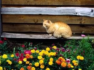 Postal: Un gato y flores
