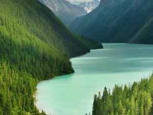 Postal: Pinos y un lago en las montañas