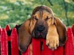 Perro dormido sobre la valla