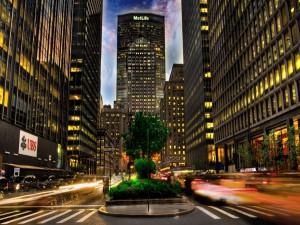 Postal: Árbol en la ciudad